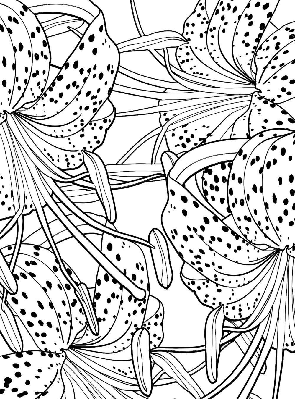 дивный сад раскраска антистресс для творчества и