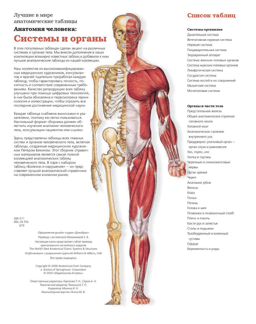 в анатомия картинках человека