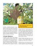 Большая энциклопедия пчеловода — фото, картинка — 13