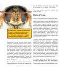 Большая энциклопедия пчеловода — фото, картинка — 10