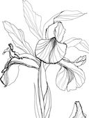 #цветочныйспам — фото, картинка — 8