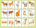 Домашние животные (16 демонстрационных картинок) — фото, картинка — 1