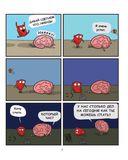 Сердце и мозг. Тайная жизнь внутренних органов — фото, картинка — 6