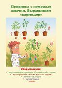Увлекательные опыты с растениями и солнечным светом. 25 развивающих карточек — фото, картинка — 3