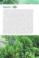 Красивые хвойные для вашего сада — фото, картинка — 2