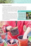Календарь работ в саду — фото, картинка — 6