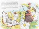 Самые красивые бабочки — фото, картинка — 1