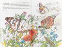 Самые красивые бабочки — фото, картинка — 2