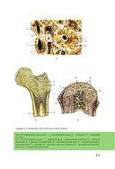 Атлас анатомии человека — фото, картинка — 11