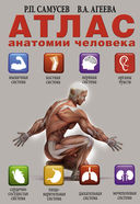 Атлас анатомии человека — фото, картинка — 1