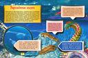 Подводный мир — фото, картинка — 2