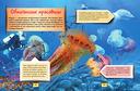 Подводный мир — фото, картинка — 6