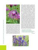 Большая иллюстрированная энциклопедия лекарственных растений — фото, картинка — 11