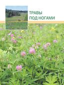 Большая иллюстрированная энциклопедия лекарственных растений — фото, картинка — 12