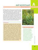 Большая иллюстрированная энциклопедия лекарственных растений — фото, картинка — 14