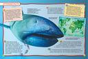 Акулы — фото, картинка — 3