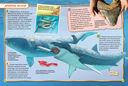 Акулы — фото, картинка — 2