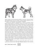 Собака. Полное руководство по дрессировке и уходу — фото, картинка — 9