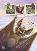 Я летучая мышь — фото, картинка — 1
