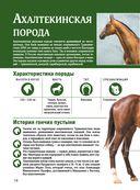 Лошади. Большой иллюстрированный гид — фото, картинка — 13
