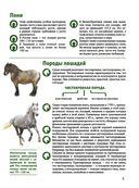 Лошади. Большой иллюстрированный гид — фото, картинка — 4