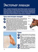 Лошади. Большой иллюстрированный гид — фото, картинка — 5