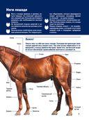 Лошади. Большой иллюстрированный гид — фото, картинка — 6