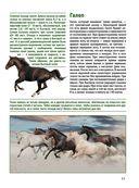 Лошади. Большой иллюстрированный гид — фото, картинка — 10