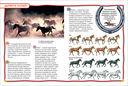 Лошади и пони — фото, картинка — 3