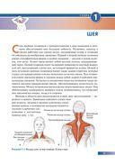 Анатомия упражнений на растяжку — фото, картинка — 9