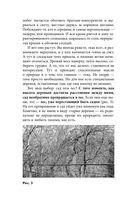 Правильная обрезка. Как сформировать крону плодовых деревьев без насилия над природой — фото, картинка — 10