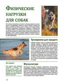 Собаки — фото, картинка — 11