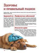 Собаки — фото, картинка — 9