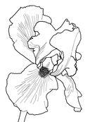 Дивный сад. Раскраска-антистресс для творчества и вдохновения — фото, картинка — 11