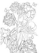 Дивный сад. Раскраска-антистресс для творчества и вдохновения — фото, картинка — 12
