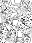Дивный сад. Раскраска-антистресс для творчества и вдохновения — фото, картинка — 3