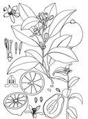 Дивный сад. Раскраска-антистресс для творчества и вдохновения — фото, картинка — 7