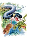 Большая книга про зверей — фото, картинка — 15