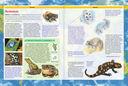 Лучшая энциклопедия для детей от А до Я — фото, картинка — 3