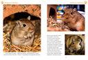 Моя первая энциклопедия животных — фото, картинка — 2