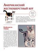 Кошки — фото, картинка — 12