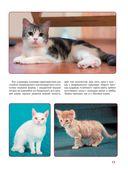 Кошки — фото, картинка — 13