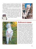 Кошки — фото, картинка — 15