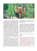 Кошки — фото, картинка — 4