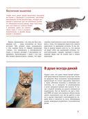 Кошки — фото, картинка — 5