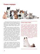 Кошки — фото, картинка — 6