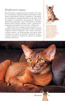 Все о кошках — фото, картинка — 11
