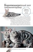 Все о кошках — фото, картинка — 12