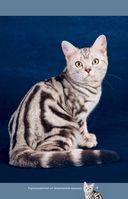 Все о кошках — фото, картинка — 13
