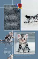 Все о кошках — фото, картинка — 14
